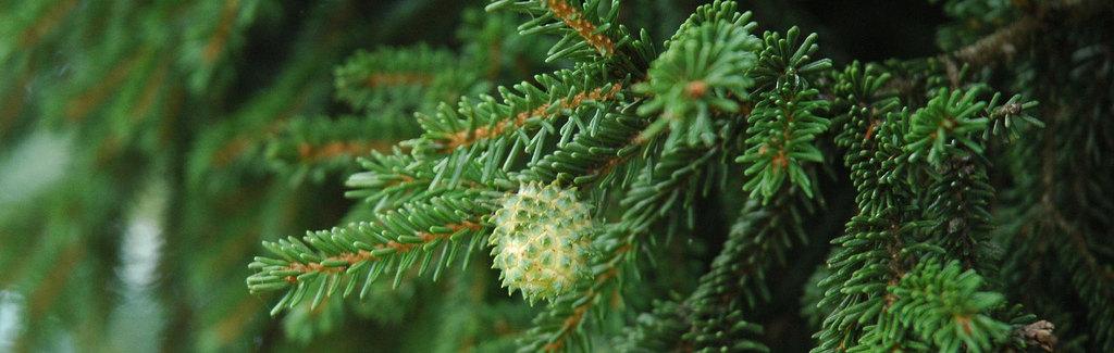 weihnachtsbaum03